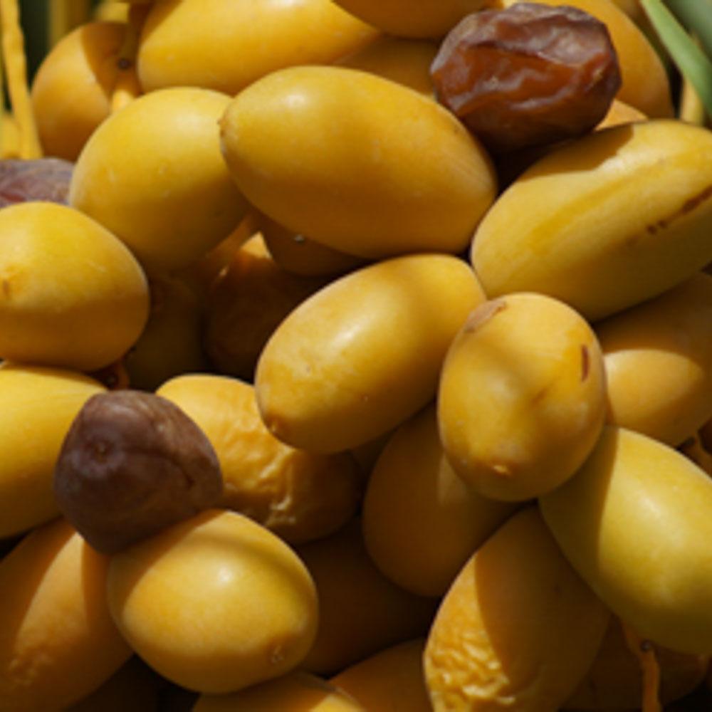 phoenix-agrotech-khadrawy-date-fruit.jpg